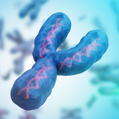 Male gender Y chromosome. Genetics concept. 3D rendered illustration.